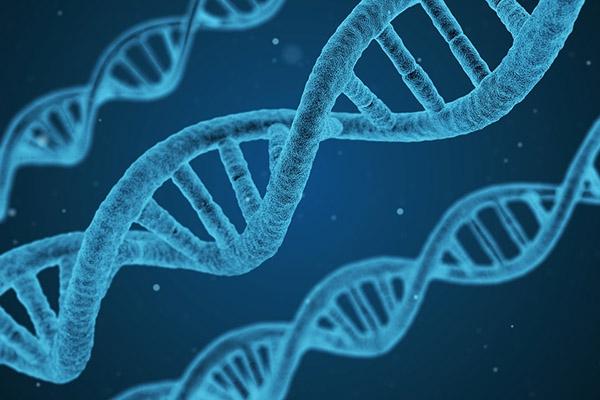 Nouveau gène responsable d'une forme rare d'épilepsie avec déficience intellectu...