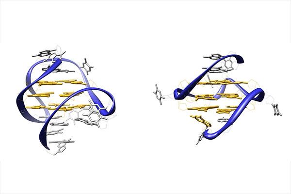 A la découverte des quadruplexes d'ADN