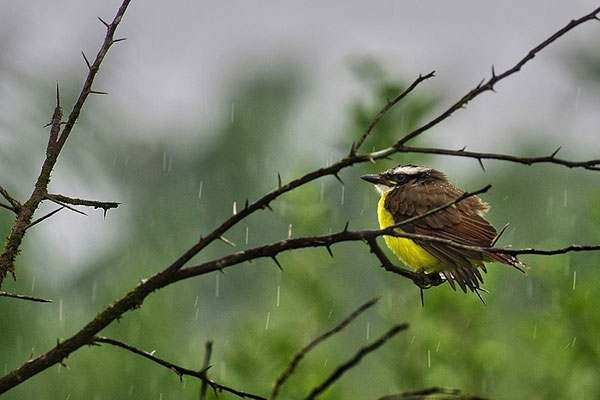 Quel est l'impact d'une forêt fragmentée sur la biodiversité ?