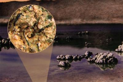 Un rôle inattendu des premiers microorganismes continentaux dans la fertilisation des océans primitifs